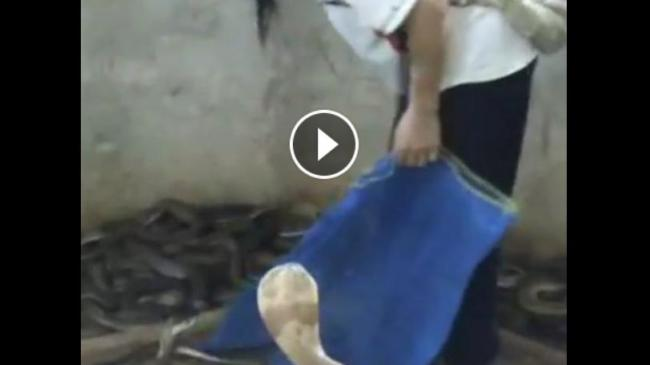 pria-tempeleng-ular-cobra-video-facebook.jpg