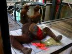 Orangutan di Australia Diajari Main Video Game