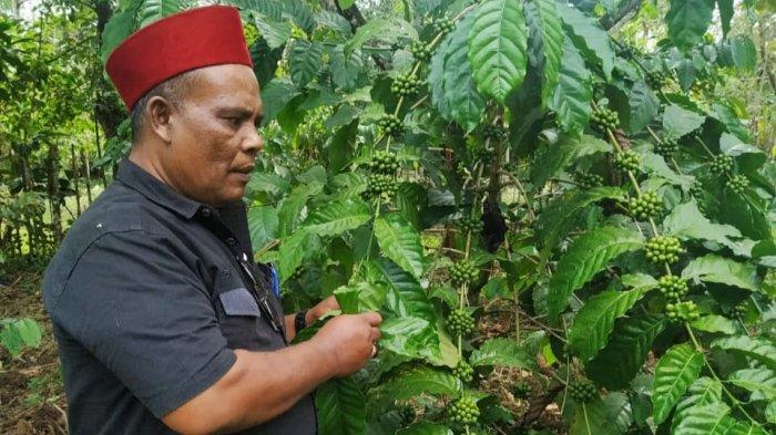 Aceh akan Ekspor Kopi ke AS