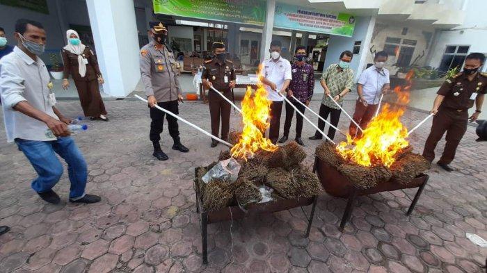 Pemusnahan Barang Bukti di Kejari Lhokseumawe, Sabu Diblender, Ganja Dibakar