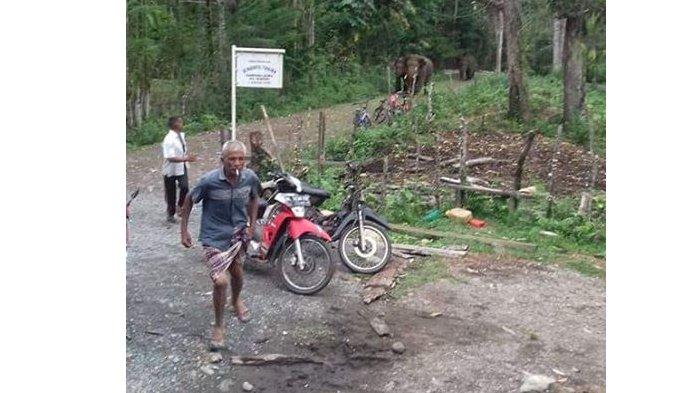 DPRA Dukung Upaya Pemerintah Hadapi Konflik Gajah