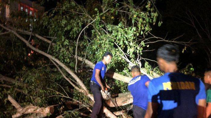 Pohon Angsana Tumbang di Jalan Blangbintang Lama, Aceh Besar