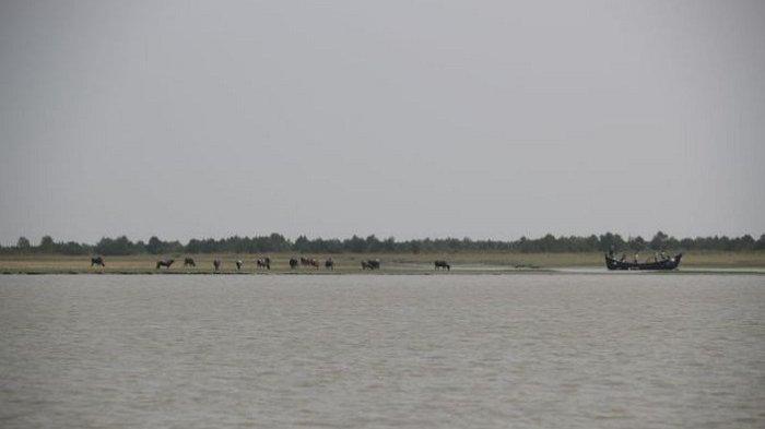Bangladesh Pindahkan Pengungsi Rohingya Secara Bertahap ke Pulau Terpencil Teluk Benggala