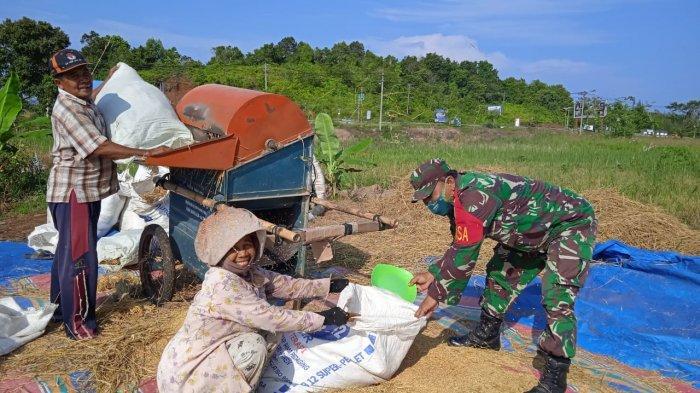 Dedikasi Untuk Petani, Babinsa Serda Kusmono 'Nyambi' Rontokkan Padi