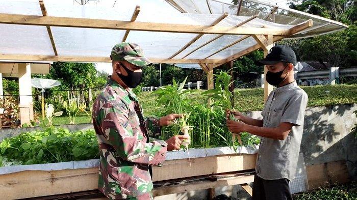 Babinsa Koramil Lageun Aceh Jaya Bantu Pemuda Kembangkan Tanaman Hidroponik