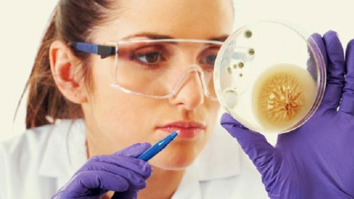 Diperkirakan Ada Ratusan Bakteri yang Hidup dalam Usus Manusia