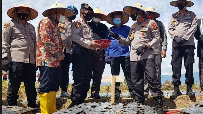 Kapolda Tanam Bawang Merah 10 Hektare di Pidie, Begini Harapan Terakhir sebelum Pindah Tugas