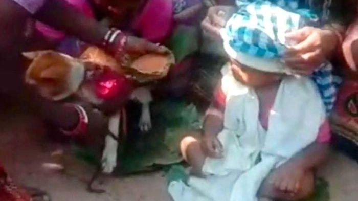 Dipercaya Bisa Mengusir Nasib Buruk, Bayi Umur 1 Tahun Dinikahkan dengan Anjing oleh Keluarganya