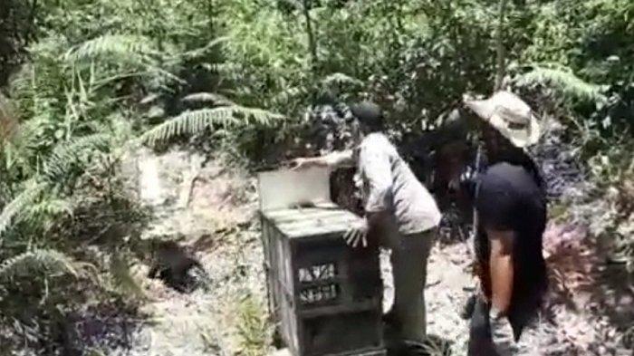 Beruang Madu Sitaan Dilepas ke Hutan Lindung di Aceh Barat, Pelaku Masih Diproses Hukum