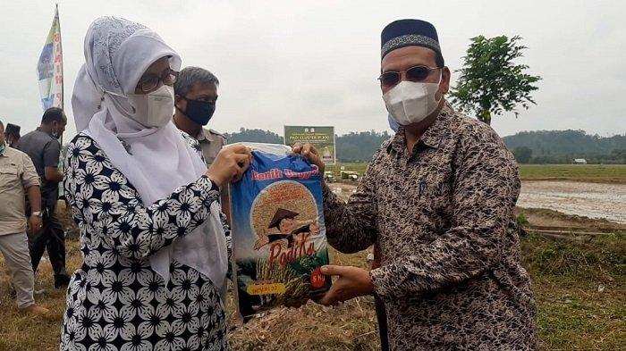 Aceh Timur Sambut Baik Penanaman Padi 1P 300 Perdana