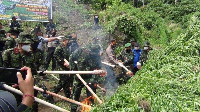 Kepala BNN Pusat Bersama TNI dan Polri Musnahkan Dua Hektare Ladang Ganja di Pulo Lamteuba Seulimuem
