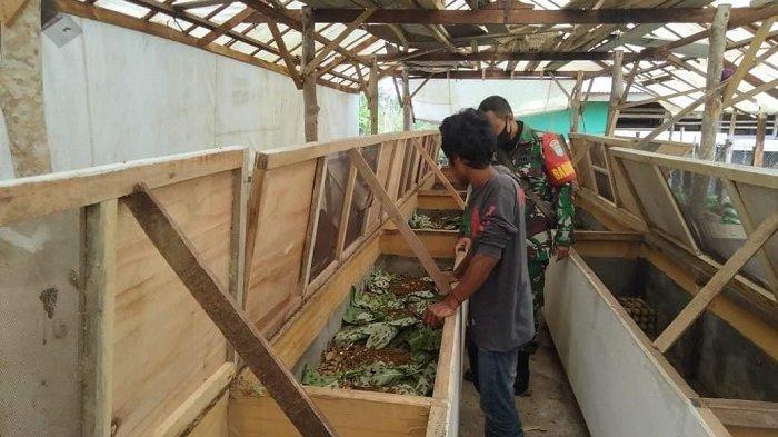 Warga Lam Keumok Aceh Besar Budidaya Jangkrik, Babinsa Koramil Peukan Bada Beri Pendampingan