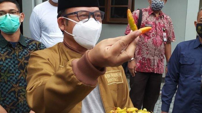 Bupati Banyumas Achmad Husein menunjukkan cabai rawit yang diduga dicat di kompleks Pendapa Sipanji Purwokerto, Kabupaten Banyumas, Jawa Tengah, Rabu (30/12/2020).