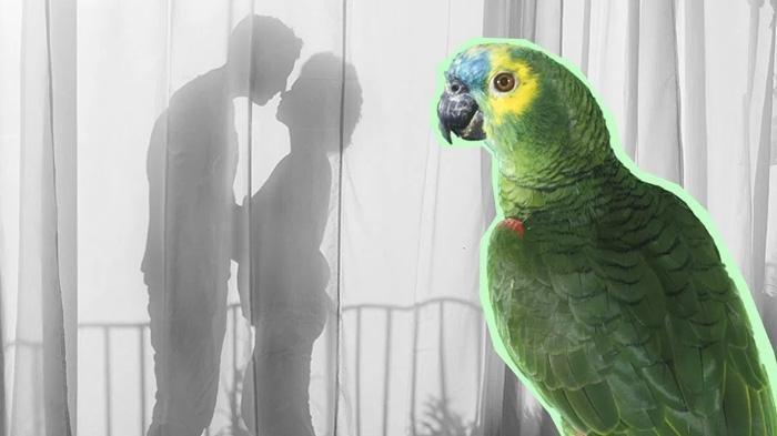 Gegara Burung Beo Tiru Kalimat Merayu Perempuan, Perselingkuhan Suami & ART Terbongkar, Istri Syok