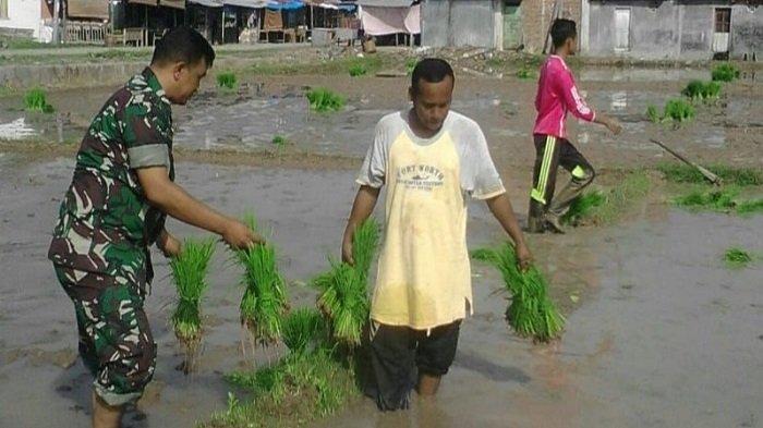 TNI Bantu Petani Kejar Realisasi Serapan Gabah di Aceh Utara