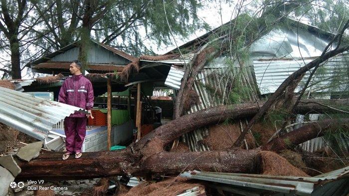 Angin Kencang, Abrasi Pantai dan Pohon Tumbang Landa Aceh Selatan