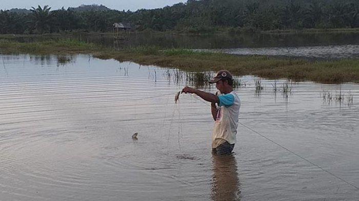 Perbaiki Kerusakan Sawah Akibat Banjir, Aceh Tamiang Ajukan Bantuan Benih ke Provinsi