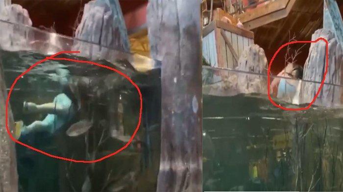 Demi Like dan Konten TikTok, Pria Ini Berenang di Akuarium Besar, Kemudian Ia Ditangkap