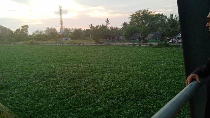 Pipa Air Bersih Patah, Eceng Gondok Penuhi Badan Sungai di Suak Ribee Hingga Menghambat Aliran Air