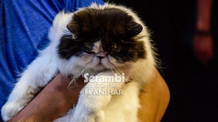 FOTO-FOTO: Puluhan Kucing Cantik dari Berbagai Ras Ikut Festival di Taman Budaya Banda Aceh - festival-kucing-2019-11.jpg