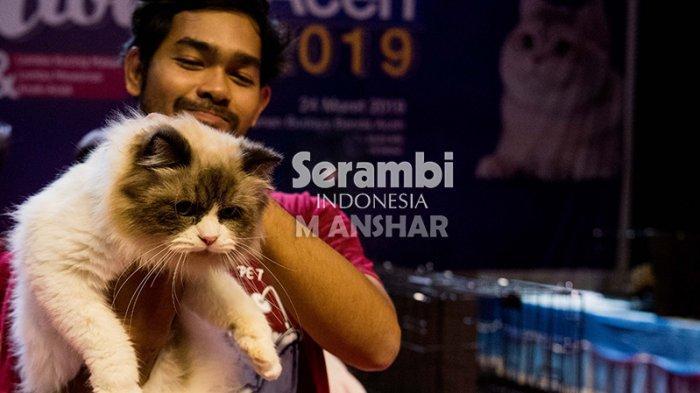 FOTO-FOTO: Puluhan Kucing Cantik dari Berbagai Ras Ikut Festival di Taman Budaya Banda Aceh - festival-kucing-2019-12.jpg