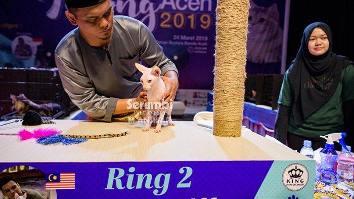 FOTO-FOTO: Puluhan Kucing Cantik dari Berbagai Ras Ikut Festival di Taman Budaya Banda Aceh - festival-kucing-2019-2.jpg