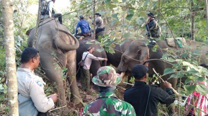 Tim Gabungan Masih Cari Satu Gajah Liar di Negeri Antara Bener Meriah untuk Dipindah ke Habitatnya