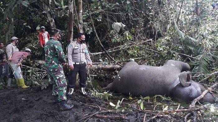 Seekor Gajah Sumatera Ditemukan Mati di Bener Meriah
