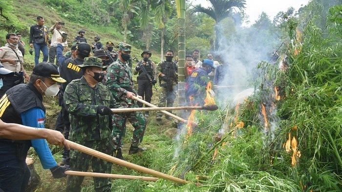 Kepala BNN RI, Komjen Pol Petrus Reinhard Golose beseta rombongan jenderal lainnya memusnakan 70.000 tanaman ganja di kawasan Sawang, Aceh Utara, Selasa (6/4/2021).