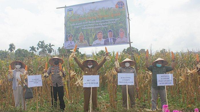 GTRA Aceh Besar Panen Jagung di Eks Lahan Ganja