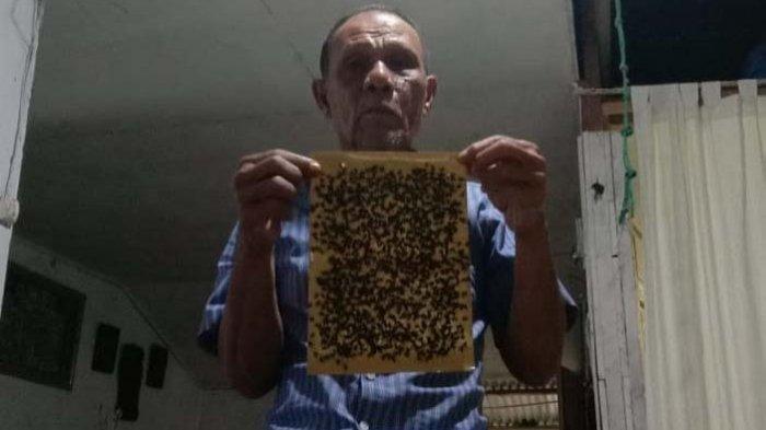 Warga Kuala Batee Abdya 'Diserang' Hama Lalat, Diduga Berasal dari Tempat Ini