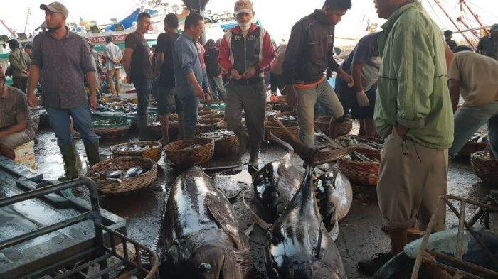 Harga Ikan di PPS Kutaradja Lampulo Masih Normal, Lelang Cepat Sepi, Ini Harga Lelang dan Eceran