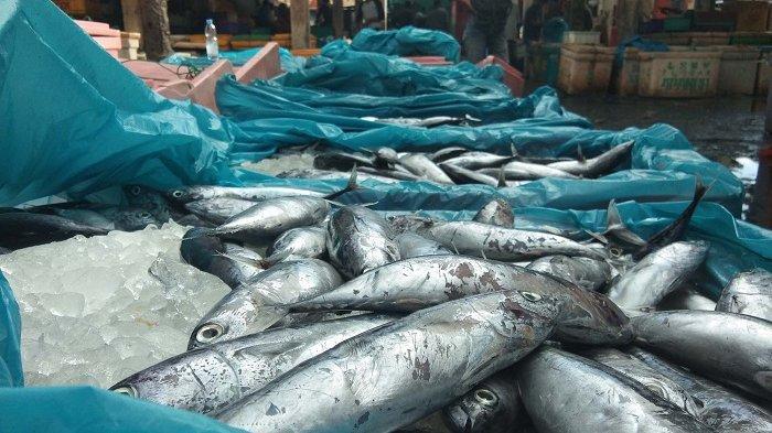 Harga Ikan Tongkol Anjlok di Lhokseumawe, Ini Kata Pedagang