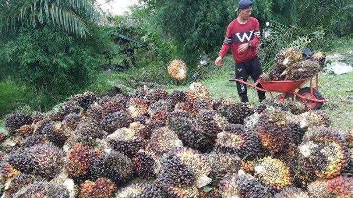 Ikuti Langkah Indonesia, Malaysia Ajukan Gugatan ke WTO Terkait CPO