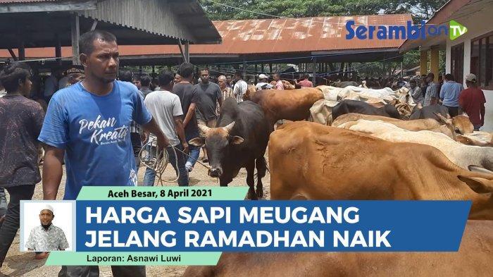 Menjelang puasa Ramadhan 1442 Hijriah, pasar Hewan Sibreh di Kecamatan Sukamakmur, Aceh Besar,  padat dan macet. Warga antusias berburu daging sapi meski harga mengalami kenaikan dari tahun sebelumnya.