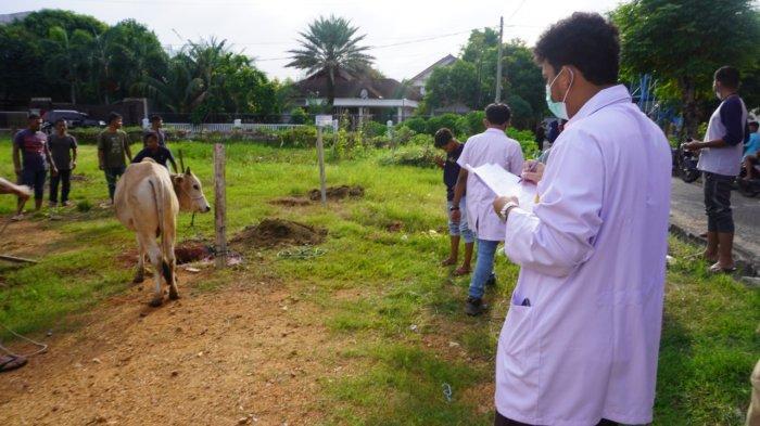 Sebanyak 3.065 Hewan Kurban Disembelih pada Idul Adha 1442 H di Kota Banda Aceh