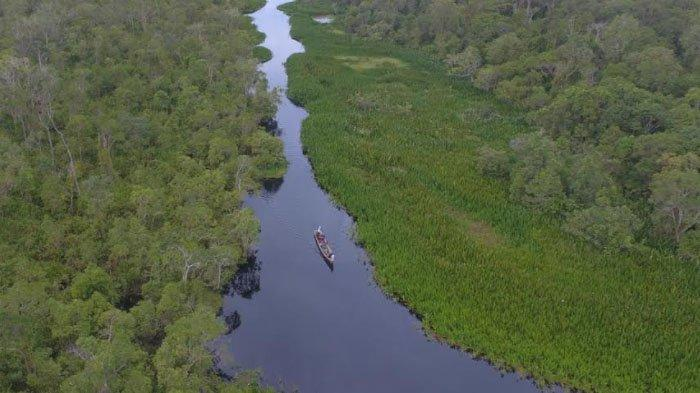 Tips Berpetualang dengan Orangutan di Alam Liar Rawa Singkil