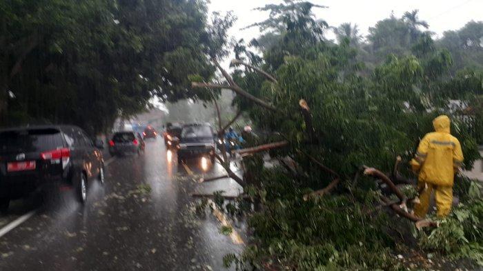 Hujan Guyur Aceh Besar, Pohon Tumbang Hingga Jalan Nasional Tergenang