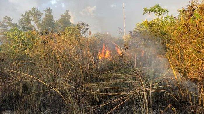 Seluas 1 Hektare Hutan Palapa Lembah Seulawah Terbakar