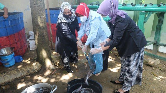 Ibu Persit KCK Koorcab Rem 011 Panen Ikan Lele Sistem Bioflok