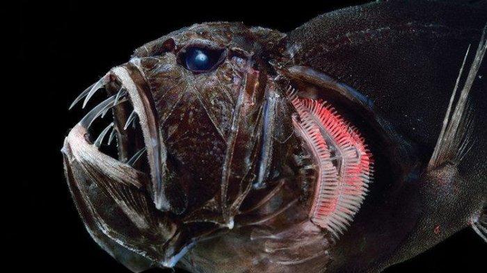 Kenapa Ikan yang Hidup di Laut Dalam Lebih Hitam, Begini Penjelasan Ahli