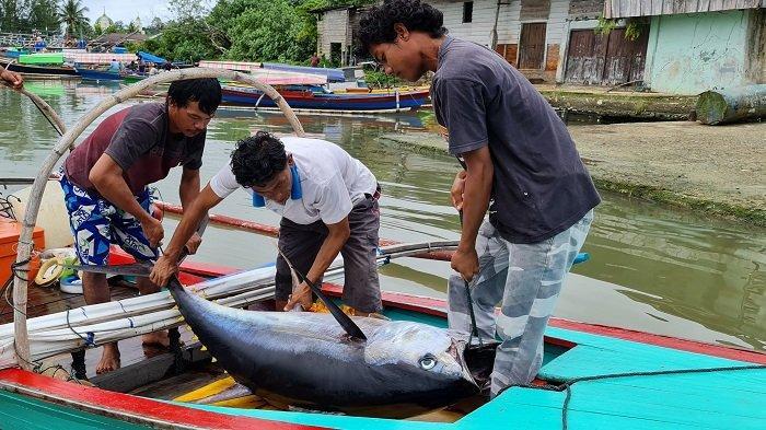 Tangkapan Ikan Tuna Nelayan Simeulue Meningkat, Harga Rp 25.000/Kg