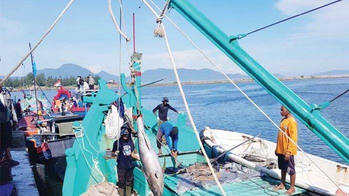 Tangkapan Nelayan Melimpah, Harga Lelang Ikan Tuna Turun, Pemasaran Dominan ke Luar Aceh