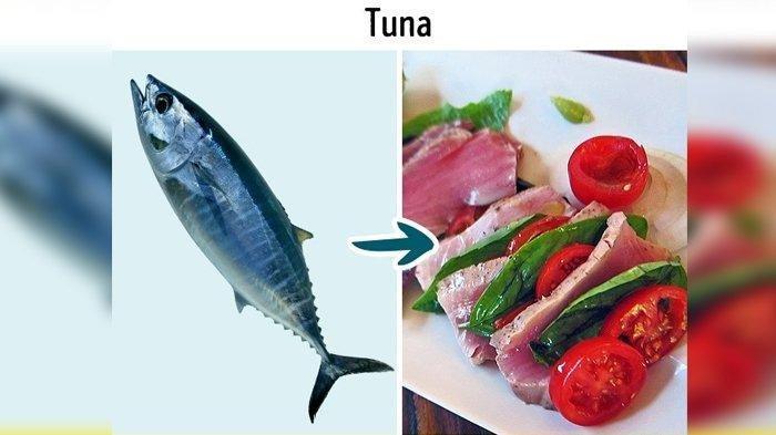 Meski Bergizi, 9 Jenis Ikan yang Tidak Boleh Dikonsumsi Terlalu Banyak, Berbahaya!