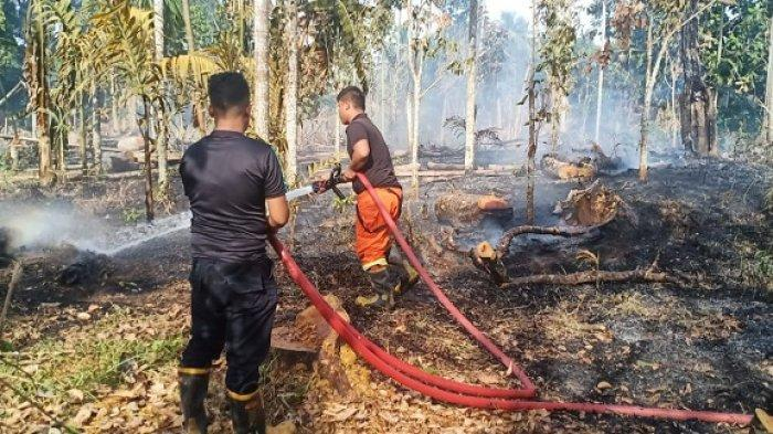 Hari Ini, Ada Empat Peristiwa Kebakaran Hutan dan Lahan yang Terjadi di Aceh Besar