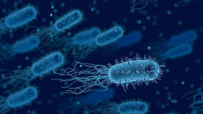 9 Jenis Bakteri Paling Berbahaya, Bisa Mengancam Kesehatan Manusia, Apa Saja?