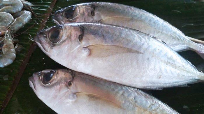 Simak Cara Simpan Ikan Biar Tetap Segar dan Aman Selama Lebaran, Tapi Ingat Ada Batas Waktunya