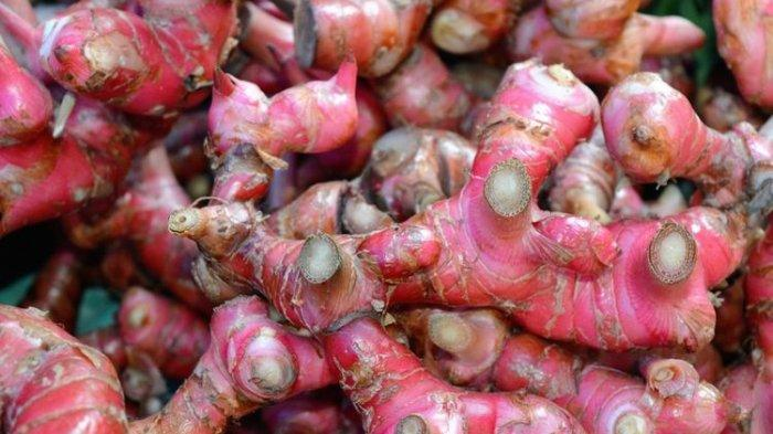 Ilustrasi jahe merah, salah satu tanaman herbal asli Indonesia.