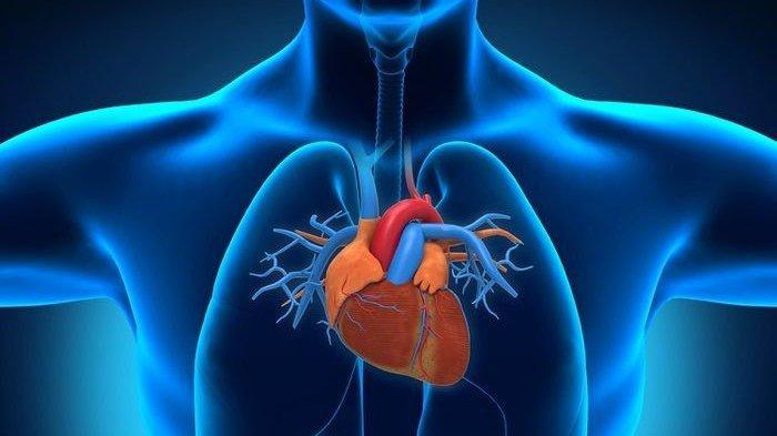 8 Tips Menjaga Kesehatan Jantung Selama Musim Panas, Hindari Makanan Asin hingga Minuman Berkafein