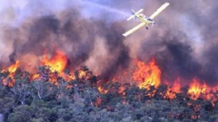 Cegah Karhutla, BPBD Imbau Masyarakat Abdya Jangan Bakar Hutan Saat Buka Lahan